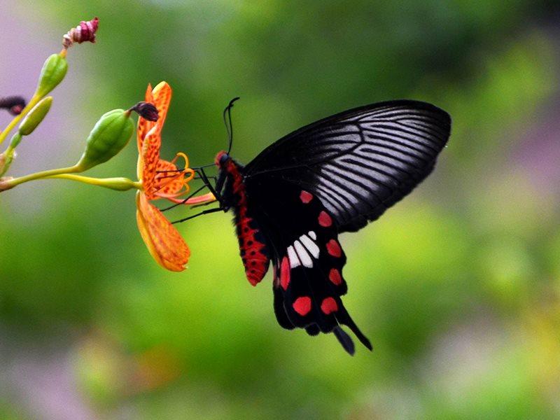 虎頭山昆蟲
