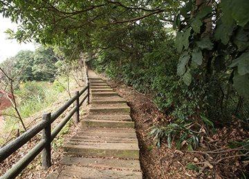 龜山楓樹坑步道