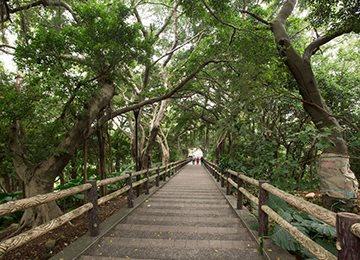 賞景健康步道