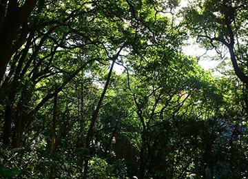 森林體驗步道
